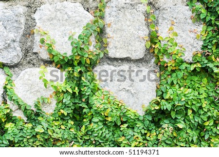leaf growing on the rock - stock photo
