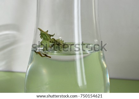Leaf Vase Water Stock Photo Royalty Free 750154621 Shutterstock