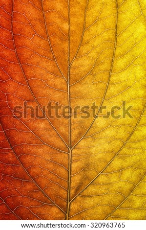 Leaf in autumn colors close-up
