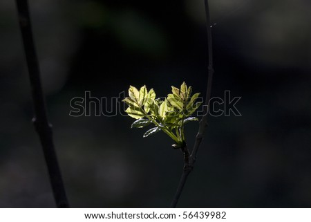 leaf in forest in detail - stock photo