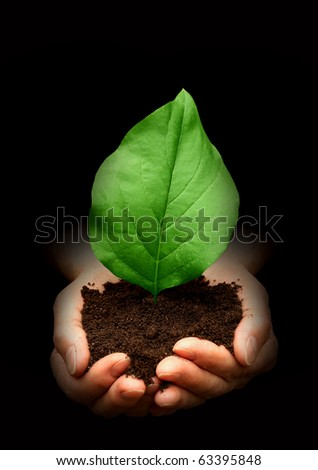 Leaf in hands - stock photo
