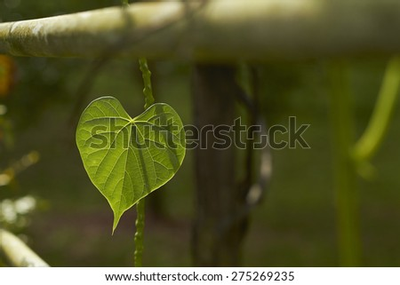 leaf in love shape