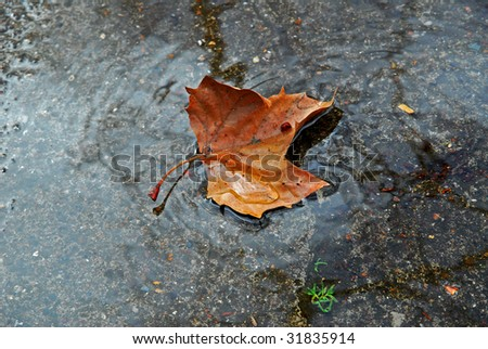 Stock photos royalty free images vectors shutterstock for Puddle of fish