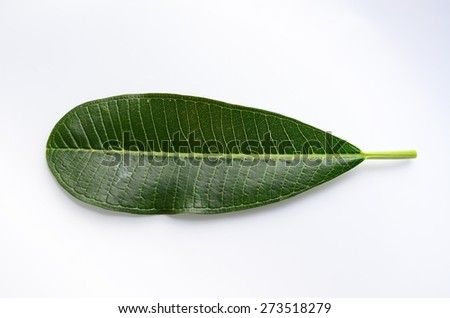 leaf isolated white wall green background  leaves organic plant fresh natural summer spring - stock photo