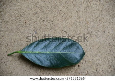 leaf leaves wall green background white nature plant nobody texture line
