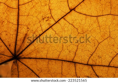 leaf macro pattern of yellow
