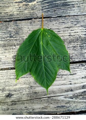 Leaf me alone - stock photo