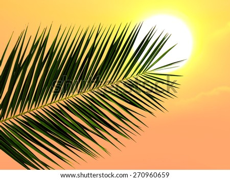 Leaf of a date palm tree against the tropical sunset  - stock photo
