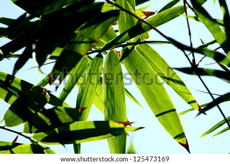 Leaf of bamboo
