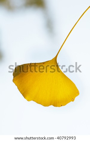 Leaf of beautiful colored leaves and nature background. - stock photo