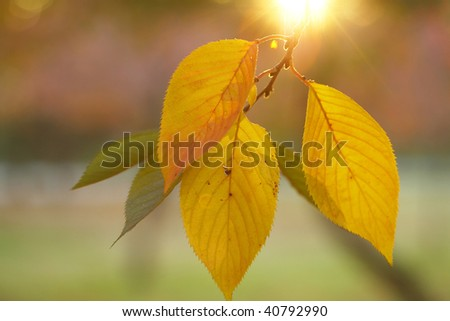 Leaf of beautiful colored leaves and sunlight. - stock photo