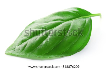 Leaf of green fresh basil isolated in white - stock photo