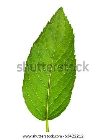 Leaf of mint isolated on white