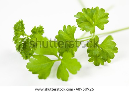 leaf of parsley plant isolated over white