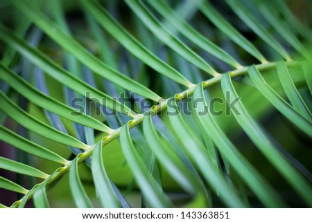 Leaf of plant background abstract - stock photo