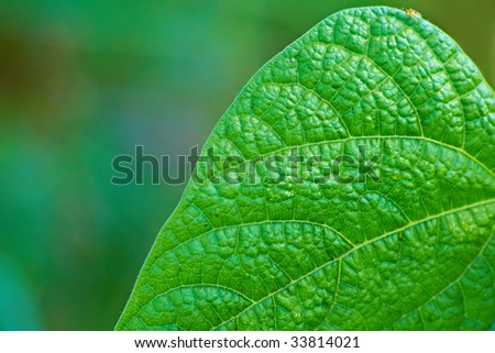 Leaf of plant closeup. Nice background.
