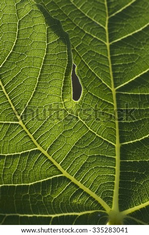 Leaf of tree, vertical - stock photo