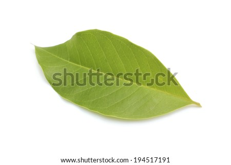 leaf of White Champ-aka