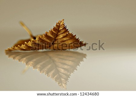 Leaf on a reflective surface - stock photo
