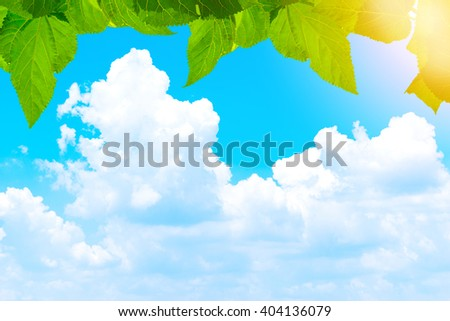 Leaf on beautiful sky with bright sunlight,wallpaper - stock photo