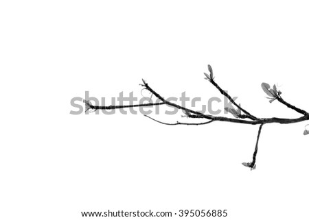 leaf on black and white background