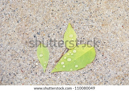 leaf on gravel floor after rain - stock photo