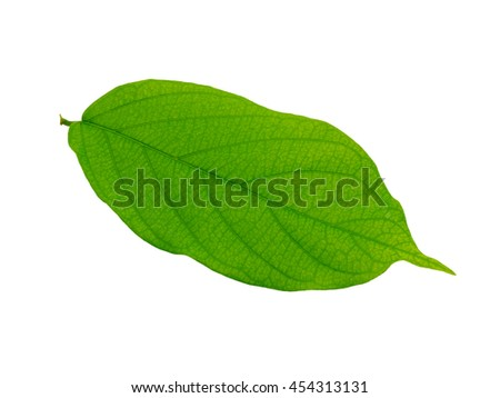 leaf on isolate white background.