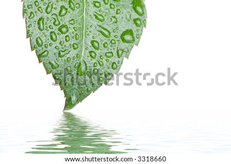 Leaf on water - stock photo