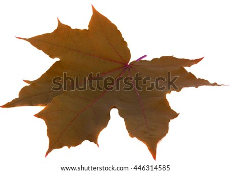 Leaf on white - stock photo