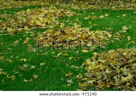 Leaf Piles - stock photo