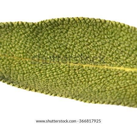 Leaf sage tea of a white background - stock photo