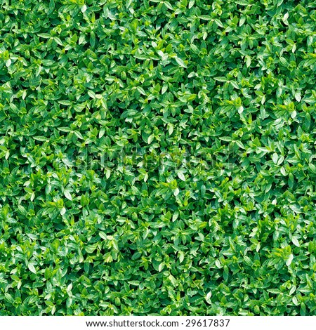 Leaf seamless background. (See more seamless backgrounds in my portfolio). - stock photo