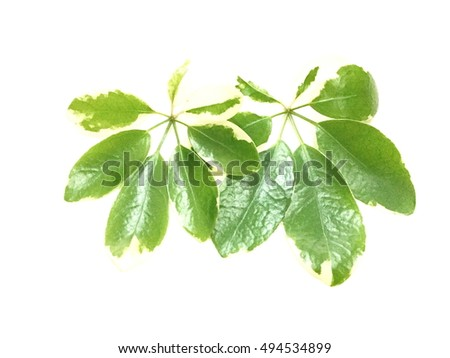 Leaf,Seamless green leaves background