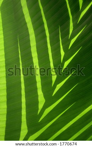 Leaf shadow on banana leaf