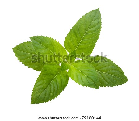 Leaf spearmint on white background - stock photo