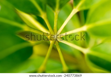 leaf stalk - stock photo