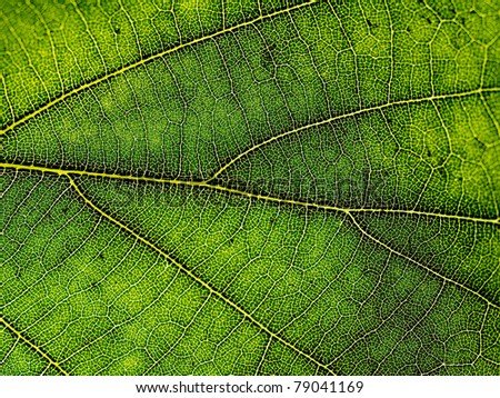 Leaf structure - stock photo