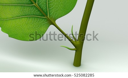 Leaf structure 3d illustration
