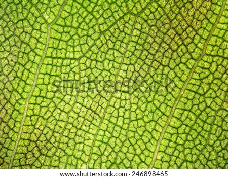 Leaf texture background - stock photo