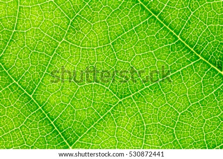 Leaf texture background for design with copy space for text or image. Leaf motifs that occurs natural.