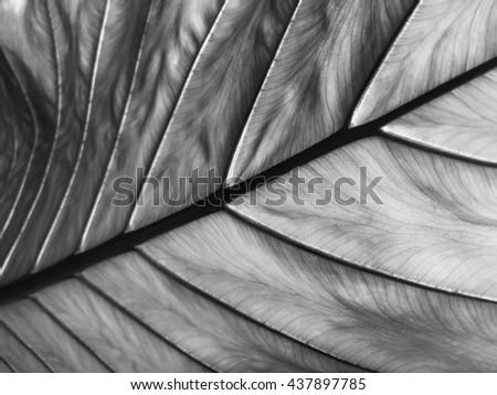 Leaf texture background in black and white tone. Abstract nature background. - stock photo