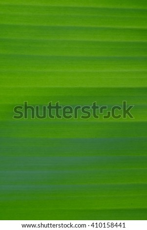 Leaf Texture.Fresh green leaf background. - stock photo