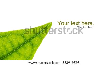 leaf texture in isolate background for fill in text - stock photo