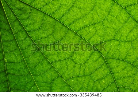 Leaf Texture./ Leaf Texture - stock photo