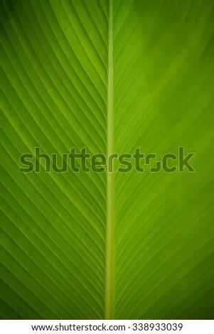 Leaf Texture./ Leaf Texture. - stock photo