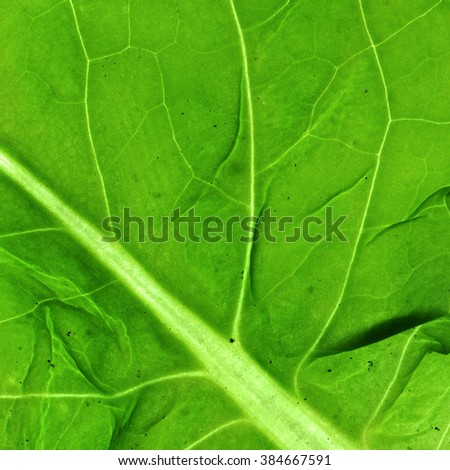 Leaf Texture./ Leaf Texture - stock photo