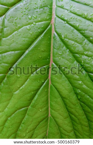 Leaf texture or leaf background