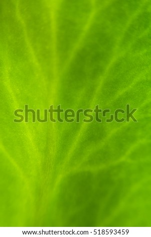 Leaf texture or leaf background. Leaf Motifs that occurs naturally. Abstract green leaf pattern for design with copy space for text or image.