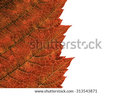 Leaf Texture Over White Background/ Leaf Texture - stock photo