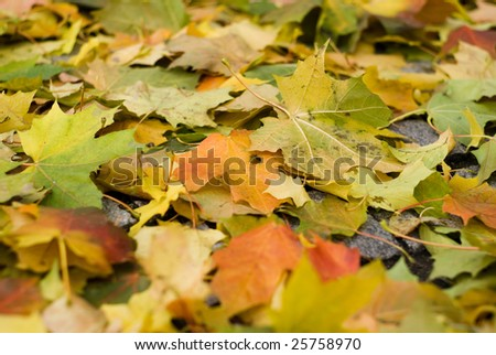 leaf tree with shallow focus - stock photo